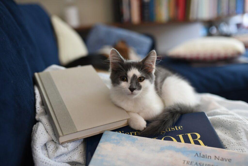libri gatti