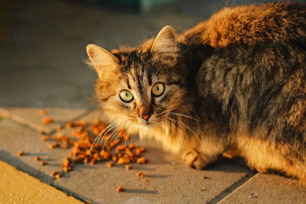 nutrire gatti