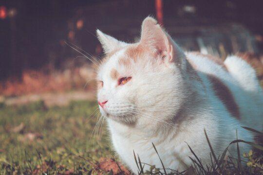 gatto amicizia