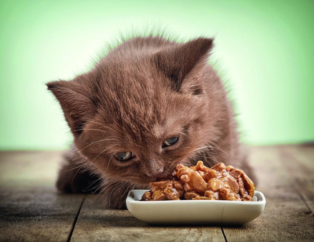 Gatto dieta