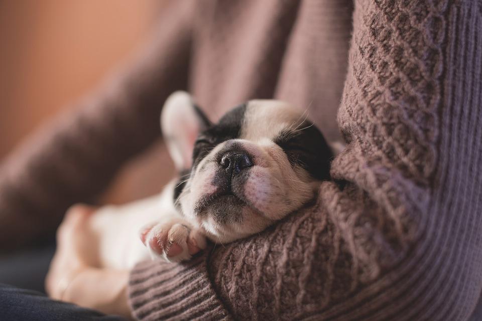 cani sognano