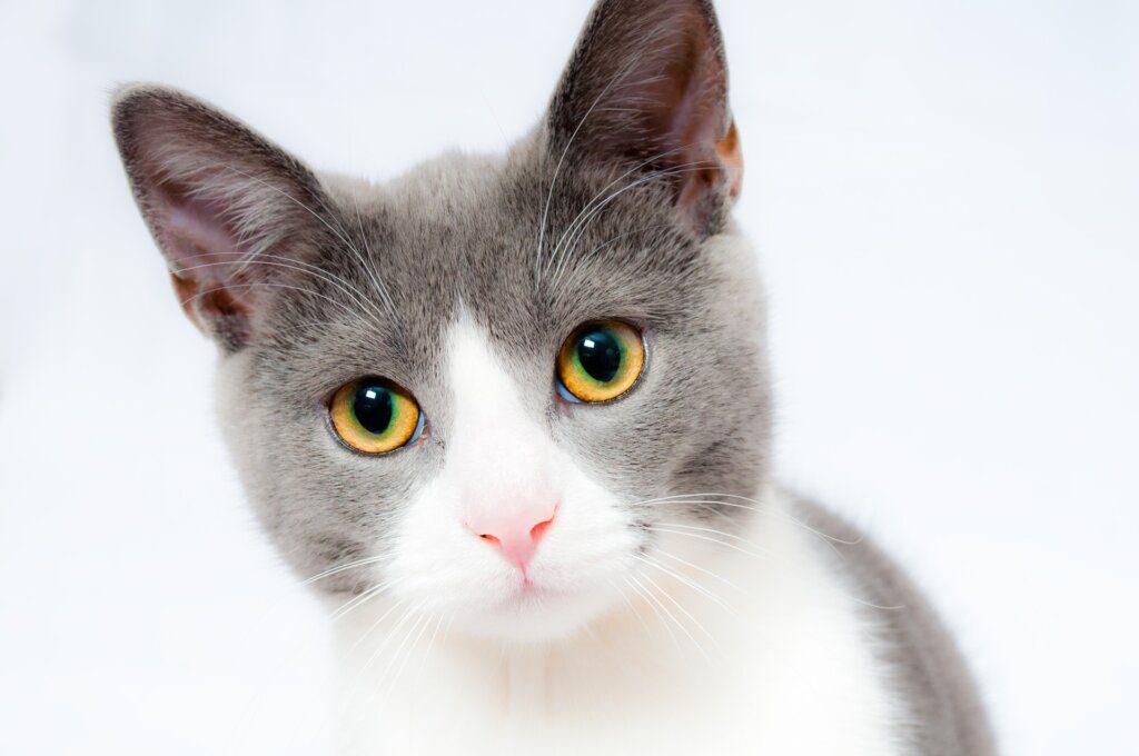 gatto ozonoterapia