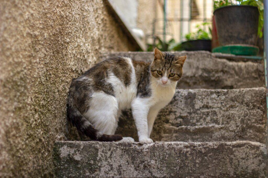 gatto vipera