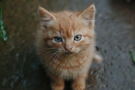 farmaci gatto