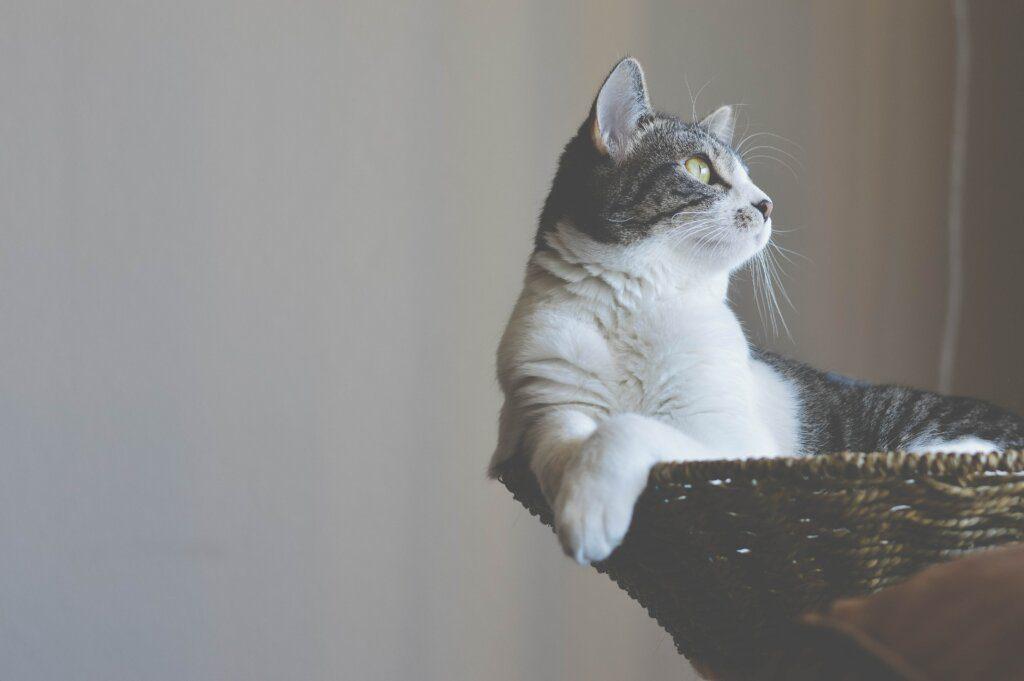 pulire zampe gatto