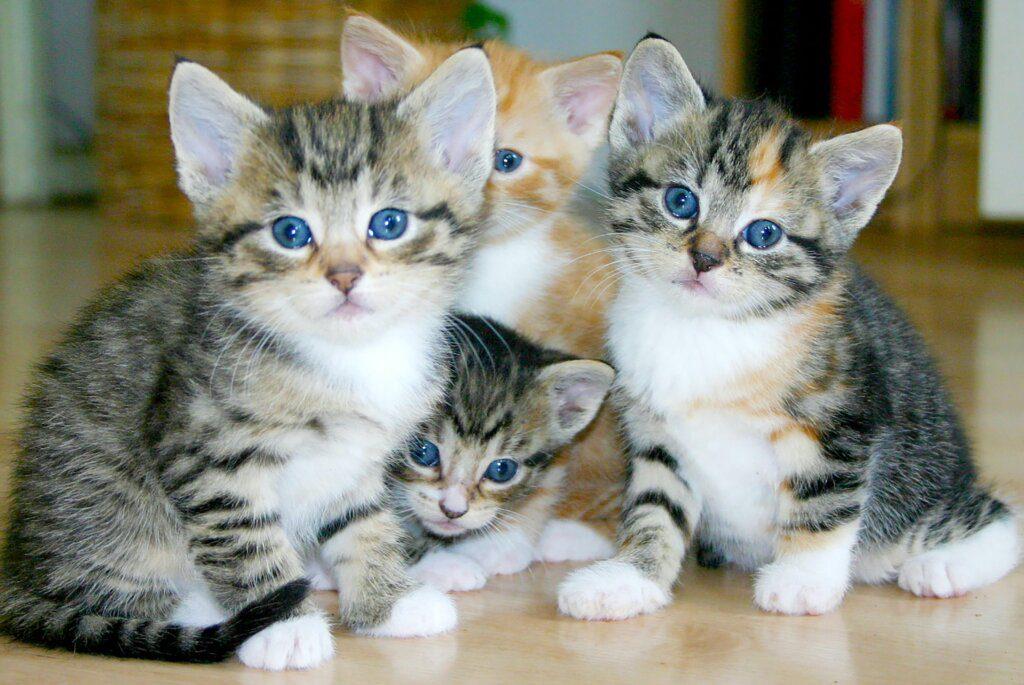 gattini catania