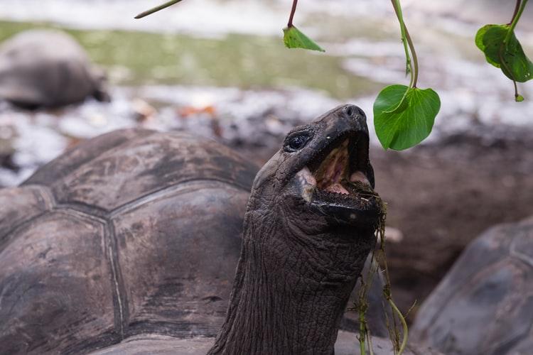 dare da mangiare a tartaruga