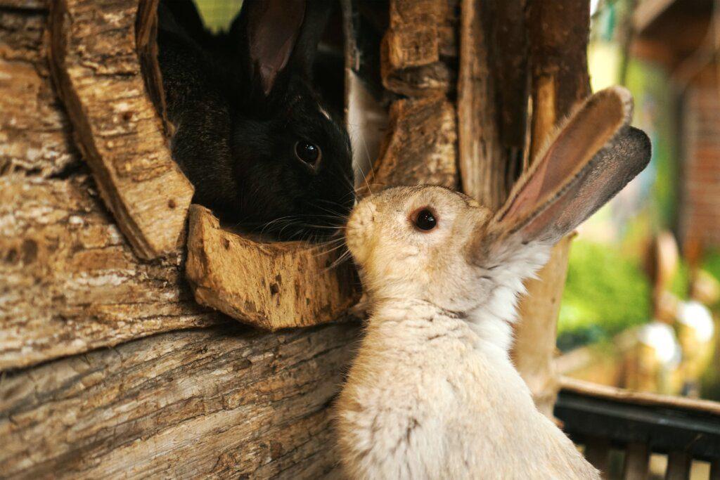tagliare unghie coniglio
