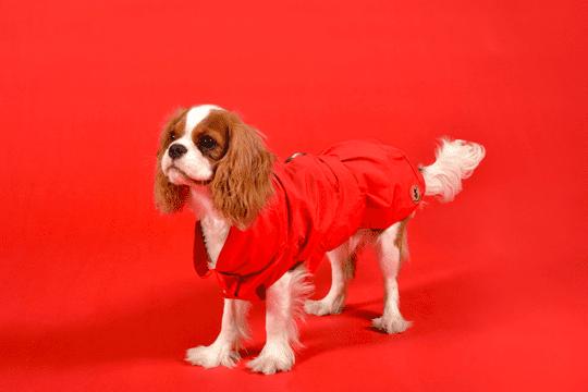 cappotti cani